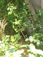 Garden 072207_015
