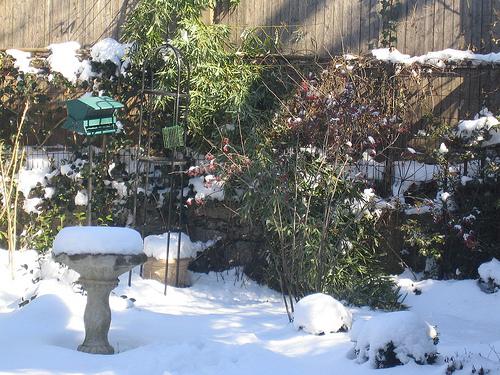 Snowy Day (5)